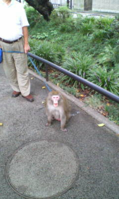 猿の散歩!